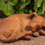 Sleeping Curled Puppy Dw