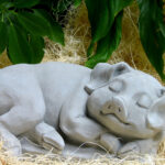 Sleeping Pig Ag