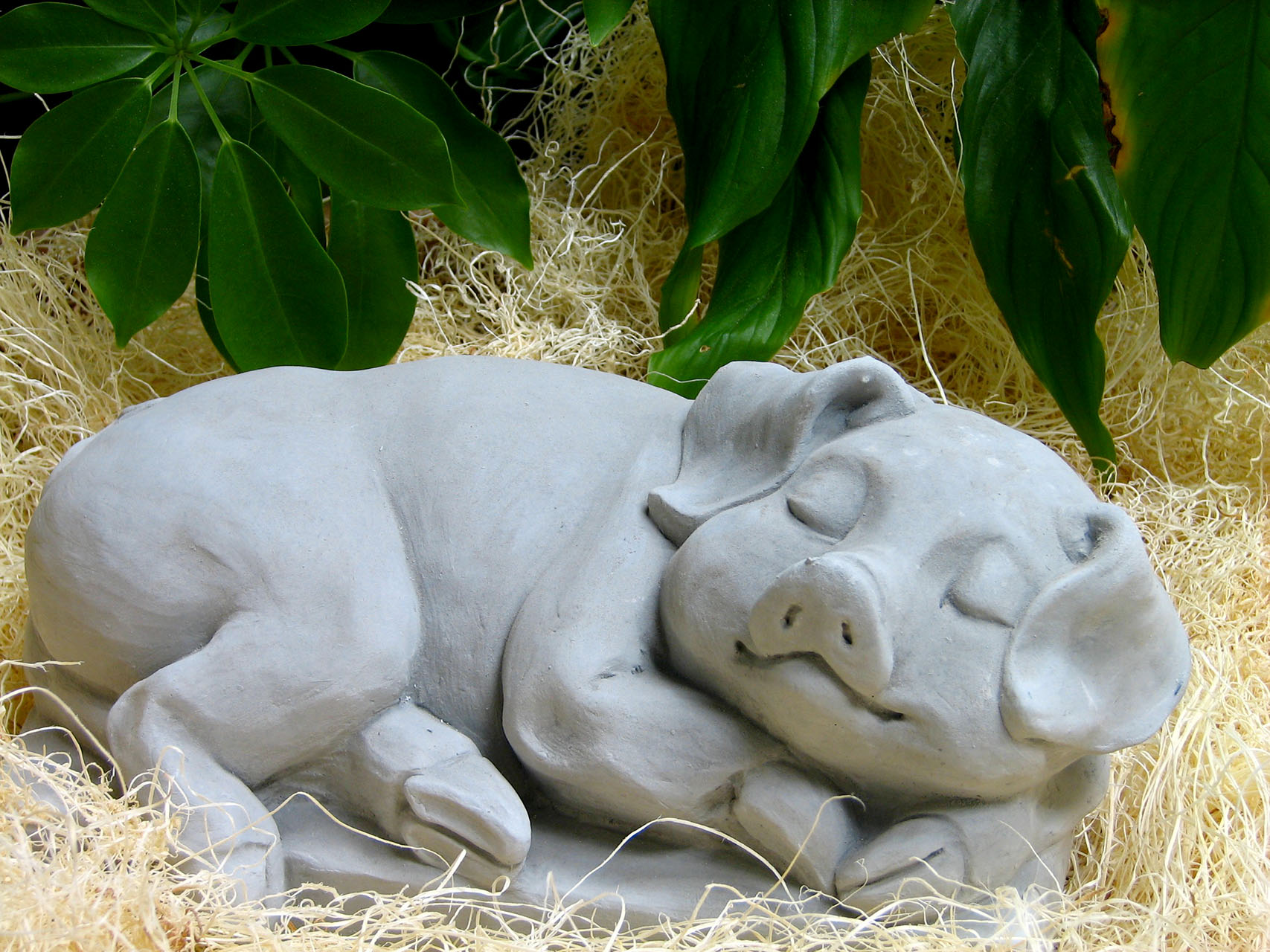 Sleeping Pig Ag