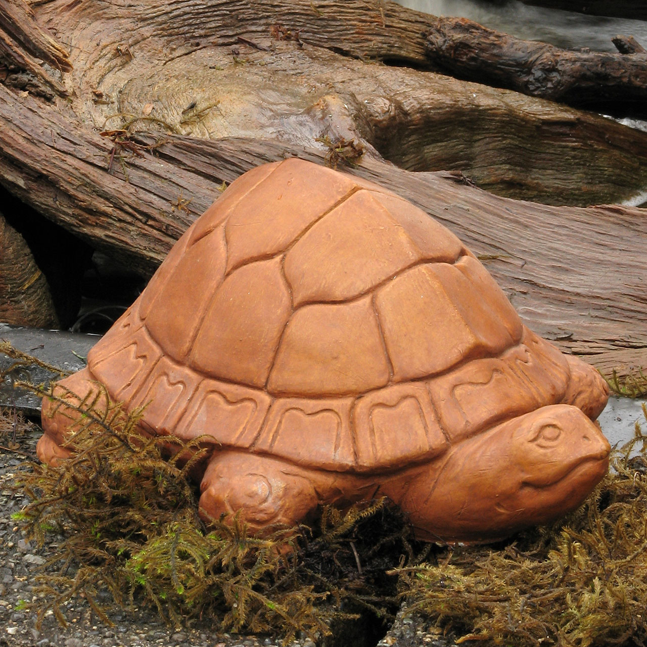 Small Tortoise Tc
