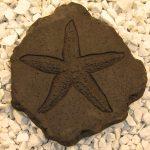 Starfish Stepstone Dw