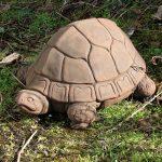 Tortoise Dw