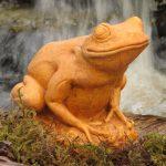 Tree Frog Tc