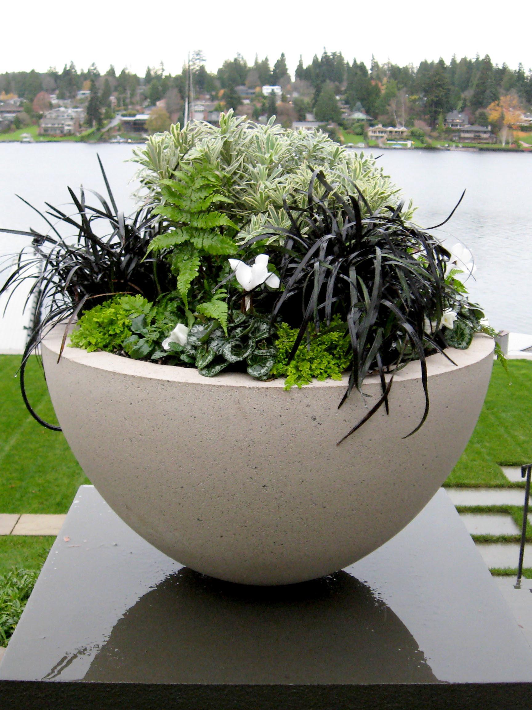 Ragen Bowl