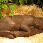 Sleeping Cat Dw