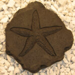 Starfish Stepstone Dw